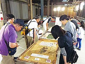 生きたお蚕さんが間近で見られる生態展示=富岡製糸場