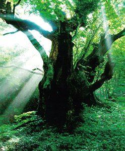 幻想の大木