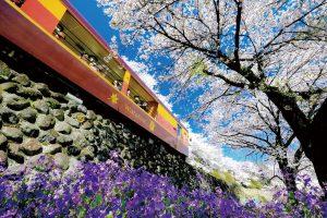 春爛漫の旅